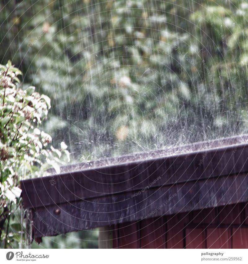 raindrops keep falling... Umwelt Natur Wasser Wassertropfen Regen Pflanze Baum Sträucher Blatt Grünpflanze braun grün schwarz Dach Dachrinne Holz Gartenhaus