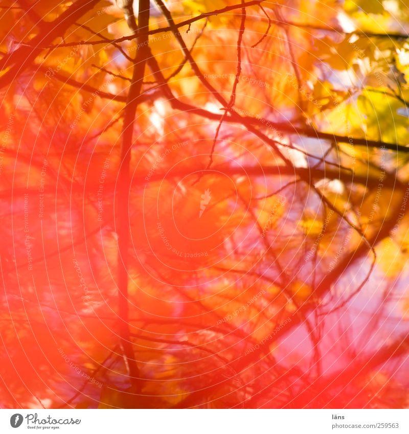 einblendung Pflanze Herbst hell herbstlich Geäst Unterholz leuchtende Farben