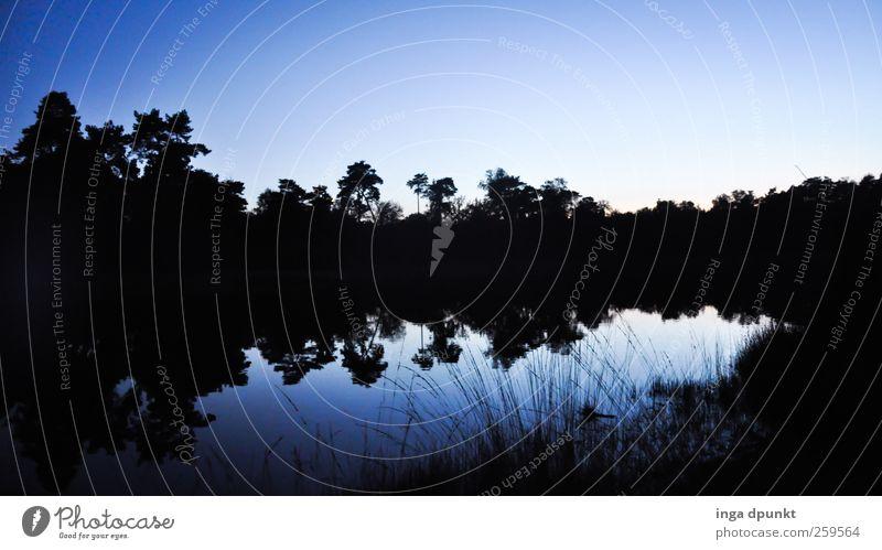 100! Am schwarzen Wasser Himmel Natur blau schön Baum Pflanze Winter ruhig Wald Erholung Umwelt Landschaft Gras See Klima