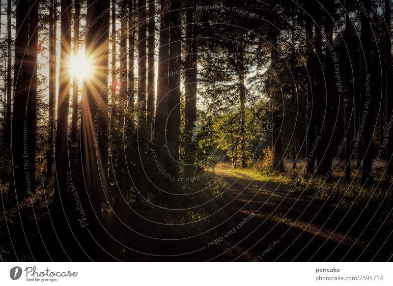 immer wieder sonntag Natur Landschaft Sonne Erholung Wald Leben Herbst Schönes Wetter Energie einzigartig Fußweg Urelemente Abendsonne