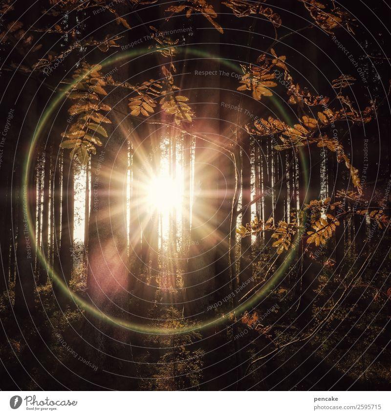 ring of fire Natur Landschaft Urelemente Sonne Herbst Schönes Wetter Baum Blatt Wald Zeichen außergewöhnlich hell rund Herbstwald Kreis Unschärfe