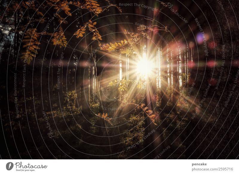 emotion | fireworks Natur Landschaft Urelemente Herbst Schönes Wetter Wald außergewöhnlich fantastisch Unendlichkeit heiß hell Wärme Herbstwald Herbstlaub Sonne