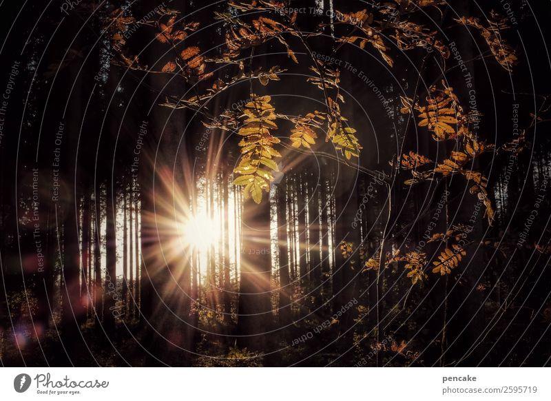 ein traumhaftes | betthupferl Natur Landschaft Pflanze Urelemente Sonne Sonnenaufgang Sonnenuntergang Sonnenlicht Herbst Schönes Wetter Baum Sträucher Wald