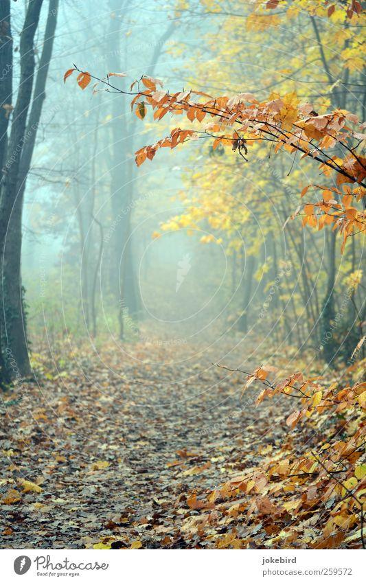 Nebelspaziergang Herbst Baum Buchenwald Herbstlaub Herbstwald Herbstfärbung Wald Fußweg Wege & Pfade Traurigkeit Trauer herbstlich Herbstwetter Farbfoto