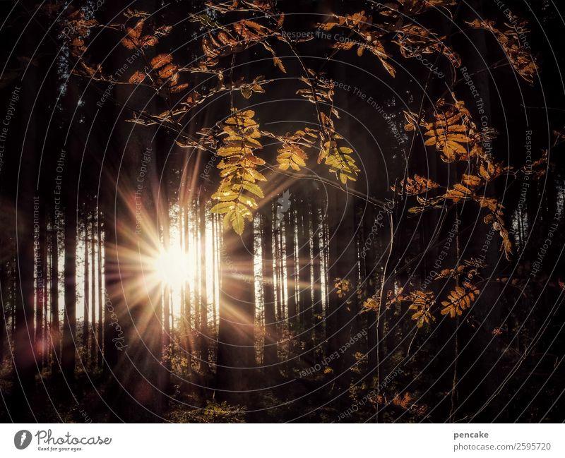 here comes the sun Natur Landschaft Baum Blatt Wald Wärme Herbst Kraft Idylle Schönes Wetter Urelemente Ebereschenblätter