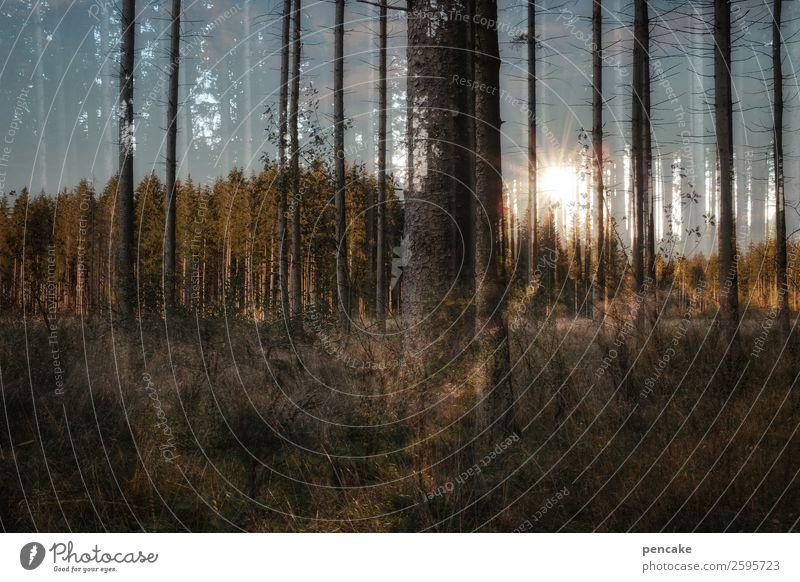 zwischen den jahren Himmel Natur Landschaft Baum Wald Baumstamm Irritation Doppelbelichtung Zwischenraum Fichtenwald