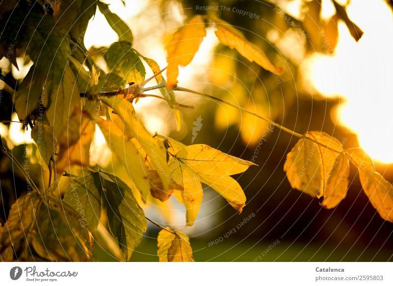 Eine Fliege Himmel Natur Pflanze schön grün Sonne Baum Tier Blatt gelb Herbst Garten orange braun Stimmung gold