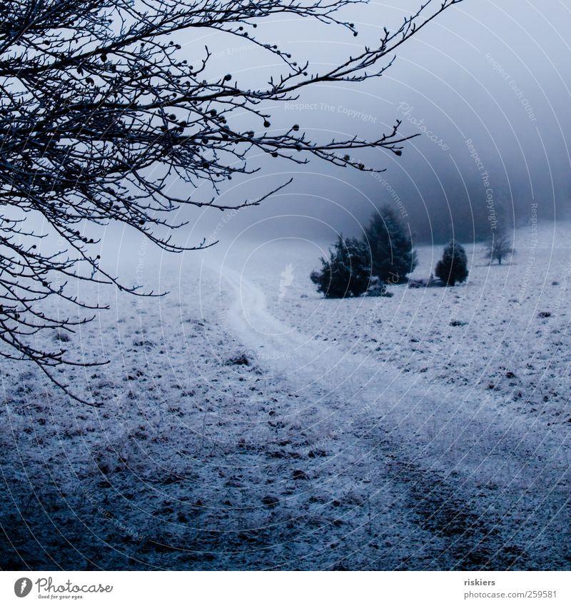 ein hauch winter Umwelt Natur Landschaft Winter Nebel Eis Frost Schnee Wiese Wald dunkel kalt blau schwarz Wege & Pfade Tiefebene Farbfoto Außenaufnahme