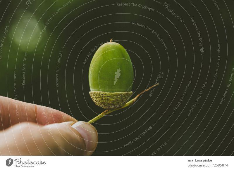 Eichel Frucht der Eiche Kind Mensch Natur Ferien & Urlaub & Reisen Pflanze Landschaft Hand Baum Tier Freude Herbst Umwelt Blüte Glück Garten Ausflug