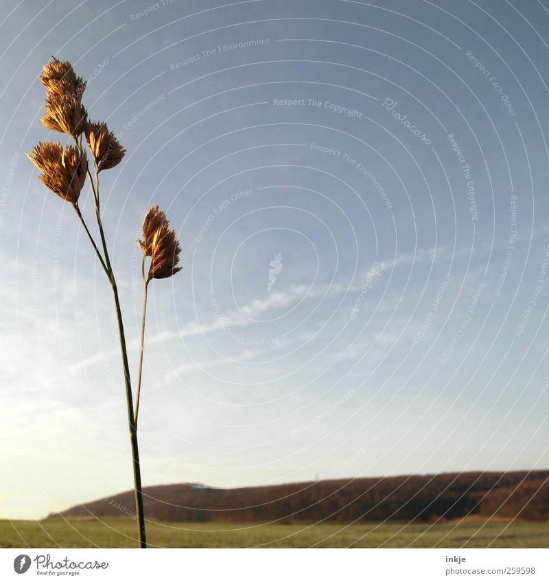 Gullivers Reisen Natur Landschaft Pflanze Himmel Herbst Winter Wetter Gras Wiese Feld Wald Hügel Stadtrand Menschenleer dünn kalt lang natürlich trist trocken