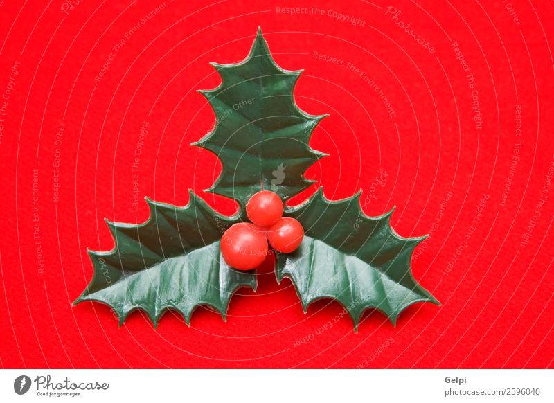 Das holly typische Ornament von Weihnachten Frucht Design Winter Dekoration & Verzierung Feste & Feiern Weihnachten & Advent Natur Pflanze Blatt natürlich neu