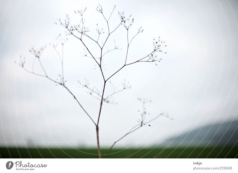 Gullivers Reisen II Himmel Natur Pflanze Winter Ferne Umwelt Landschaft Wiese Herbst Gras Luft Stimmung Horizont Wetter Feld Nebel
