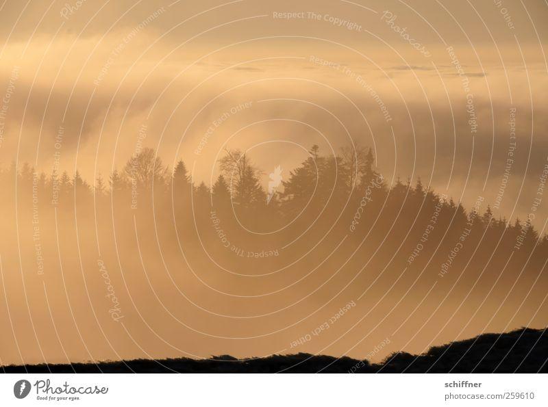 Watterausch II Umwelt Natur Landschaft Pflanze Urelemente Himmel Wolken Sonnenlicht Winter Klima Schönes Wetter Nebel Wald Hügel Berge u. Gebirge gelb gold rot