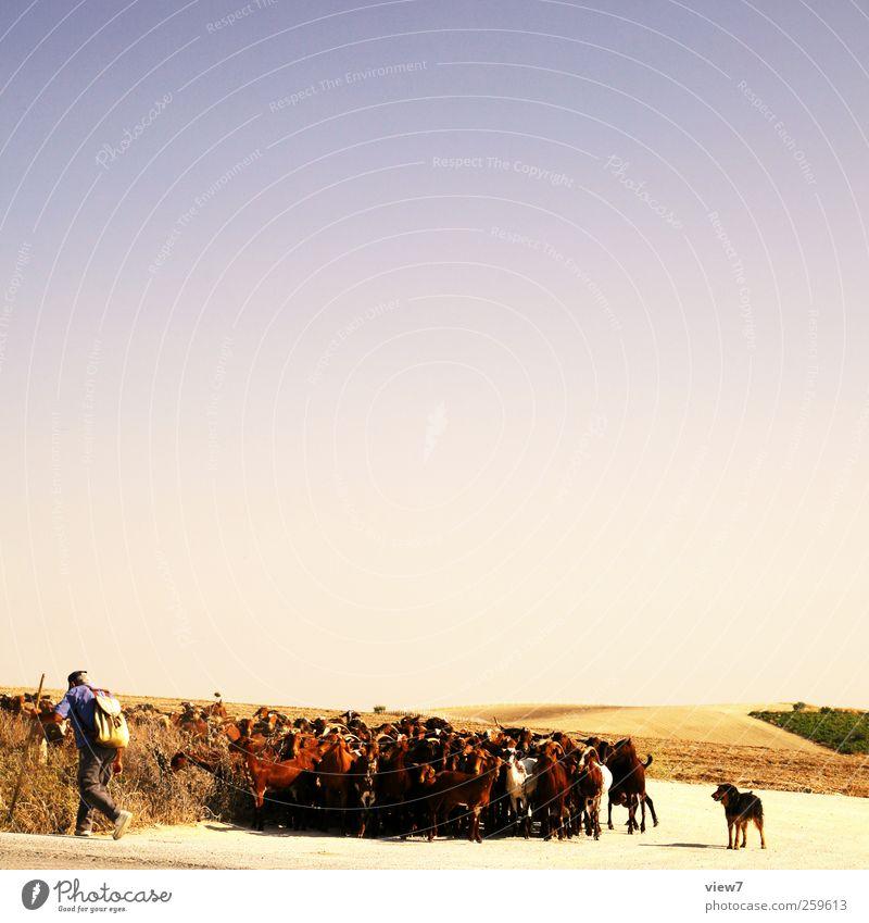 Herde Hund Sonne Zufriedenheit Feld Kraft authentisch Tiergruppe Landwirtschaft Schönes Wetter Schaf Spanien Forstwirtschaft Optimismus Herde nachhaltig Nutztier