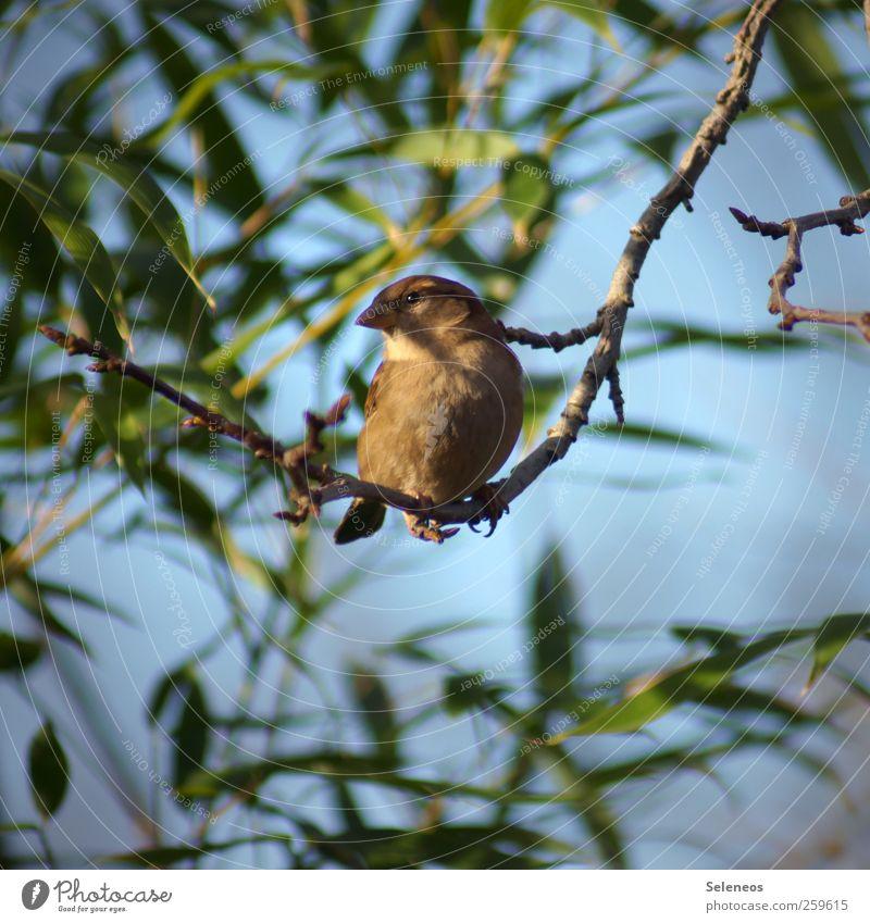 Piepmatz Himmel Natur Pflanze Sonne Sommer Blatt Tier Herbst Umwelt klein Frühling Park Wetter Vogel beobachten nah