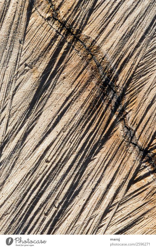Ganz schön schief Maserung Riss Holz authentisch eckig einzigartig kaputt natürlich braun Kraft zerfurcht Sägeschnitt Schnittspuren Jahresringe Totholz Farbfoto