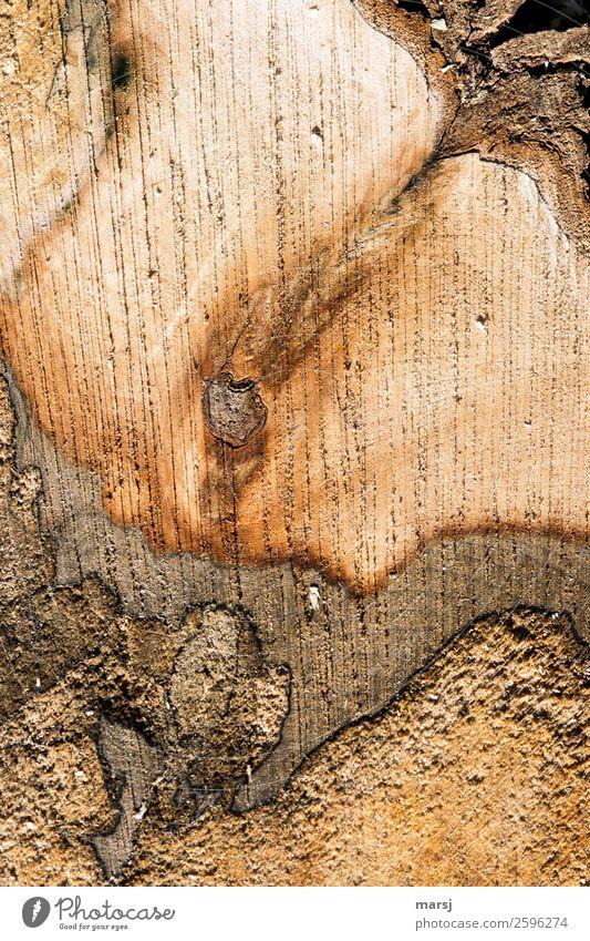 Wie geschnitten Brot Maserung Jahresringe Holz einzigartig natürlich braun Ahorn verfaulen Schnittfläche Sägespuren Baumrinde seltsam Farbfoto Gedeckte Farben