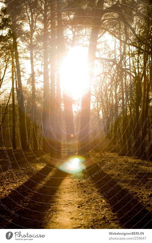 Sonnenspalt Natur Wald Wärme Beleuchtung Trennung