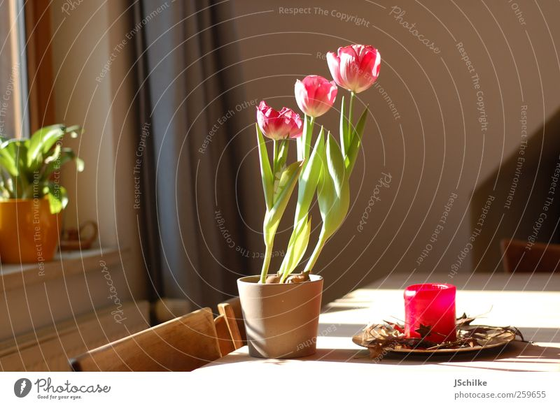 home sweet home schön Haus Leben Stil Raum Innenarchitektur Wohnung Design ästhetisch Tisch Wachstum Dekoration & Verzierung Häusliches Leben Lifestyle Kerze einfach
