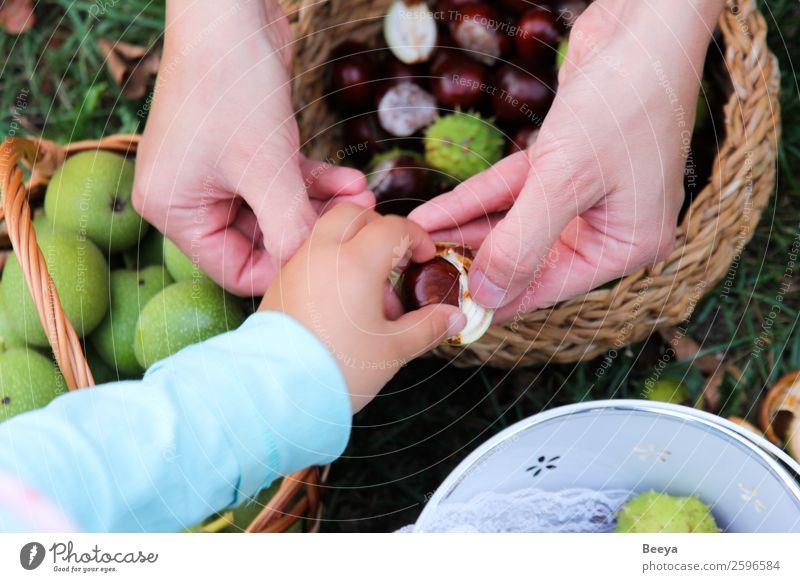 Komm raus! Kind Mensch Mädchen Mutter Erwachsene Hand 2 Umwelt Natur Herbst Baum Park Wiese berühren entdecken Zusammensein klein Neugier braun grün achtsam