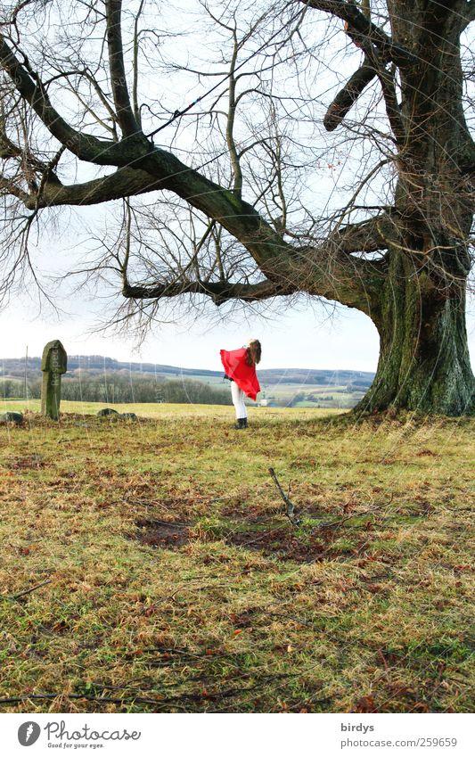 Rumpelstilzchen Mensch Natur Jugendliche Baum rot Blume Freude Winter Erwachsene Herbst Gras Junge Frau Stil Horizont Tanzen groß