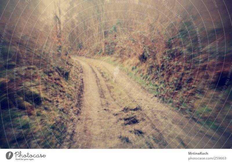 flipped lens. II Natur Pflanze Wald Umwelt Landschaft Park Erde Urelemente Jagd Urwald