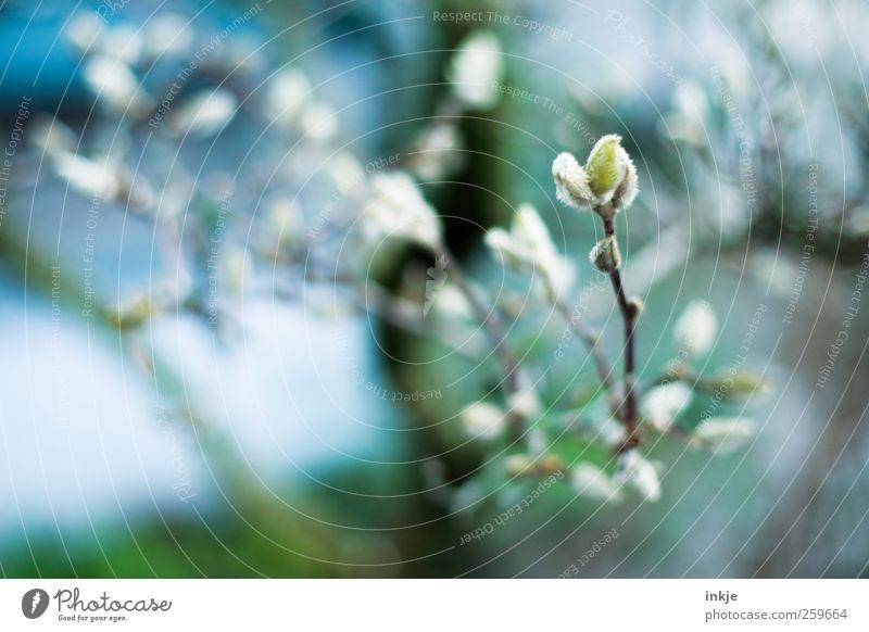 Magnolie Natur blau weiß grün schön Baum Pflanze Winter Herbst kalt Garten Stimmung Park Wetter Eis natürlich