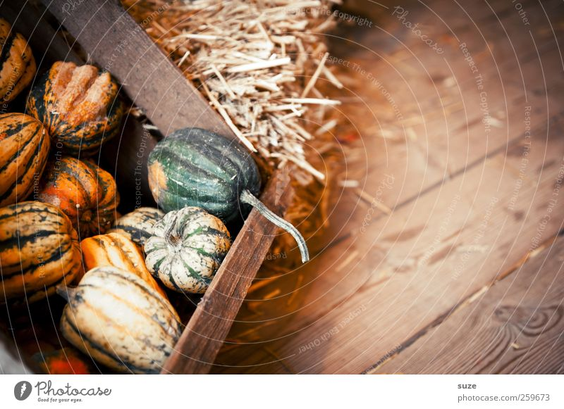 Kürbisschen gelb Herbst klein Feste & Feiern natürlich Lebensmittel Dekoration & Verzierung niedlich rund Gemüse Bioprodukte Tradition Kiste Korb herbstlich Holzfußboden