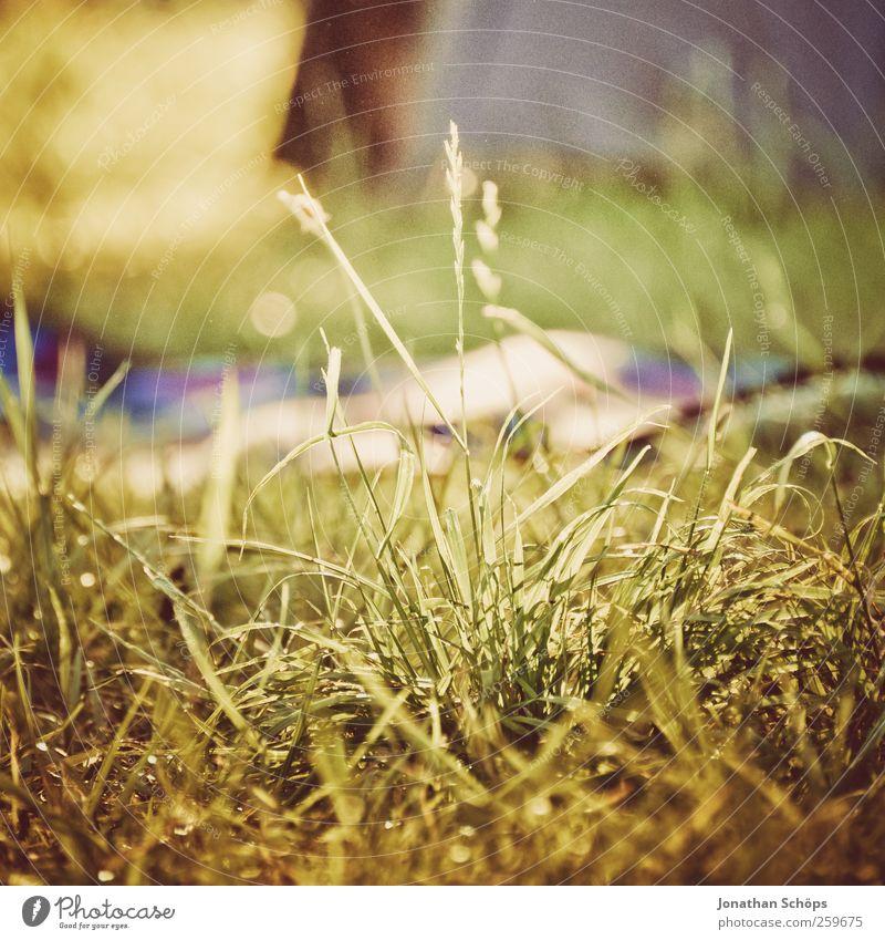 Gras Natur grün Sommer Erholung Umwelt Landschaft Glück braun Zufriedenheit ästhetisch Schönes Wetter Lebensfreude Halm Decke Picknick