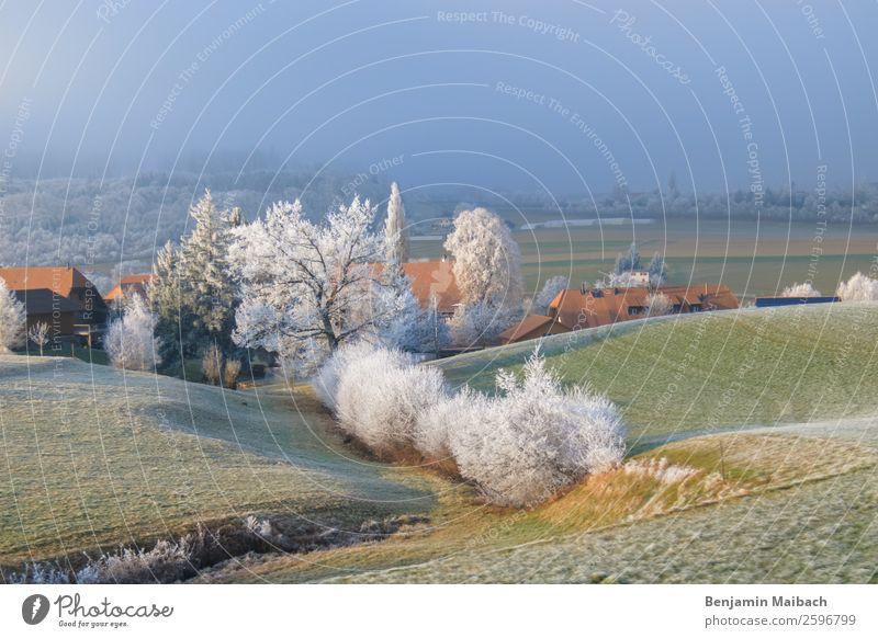 Bäume mit Frost im ländlichen Raum Natur Landschaft Pflanze Sonnenlicht Winter Wetter Eis Baum Feld Hügel Riedbach Schweiz Dorf grün weiß kalt Klima ruhig