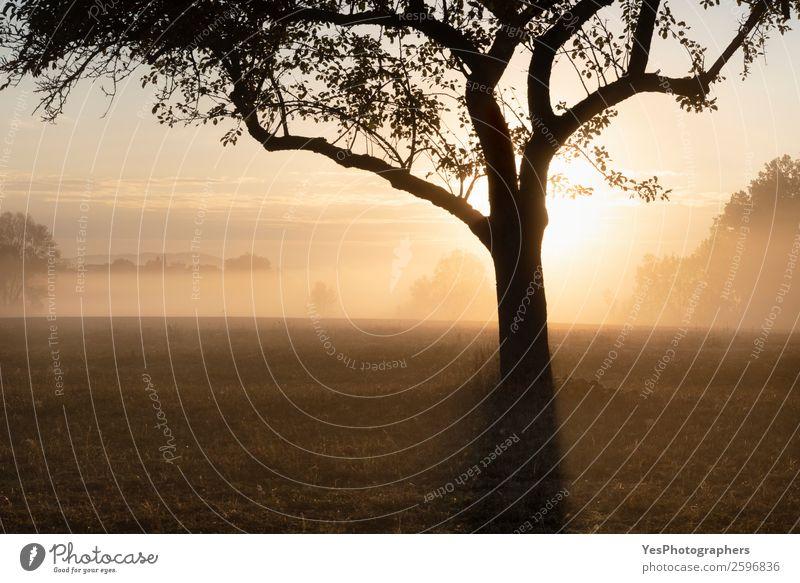Natur Landschaft Baum Wald gelb Herbst Wiese Deutschland Textfreiraum hell träumen Nebel gold Schönes Wetter Surrealismus Dunst