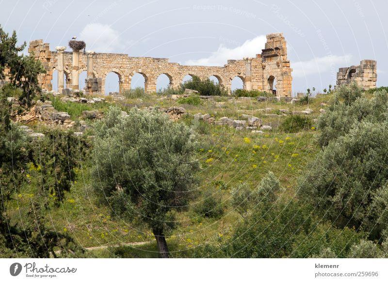 Altrömische Stadt, Volubilis, Marokko Landschaft Erde Baum Ruine Architektur Denkmal Stein historisch Historie Afrika Weltkulturerbe Rom Wand Römer Marokkaner