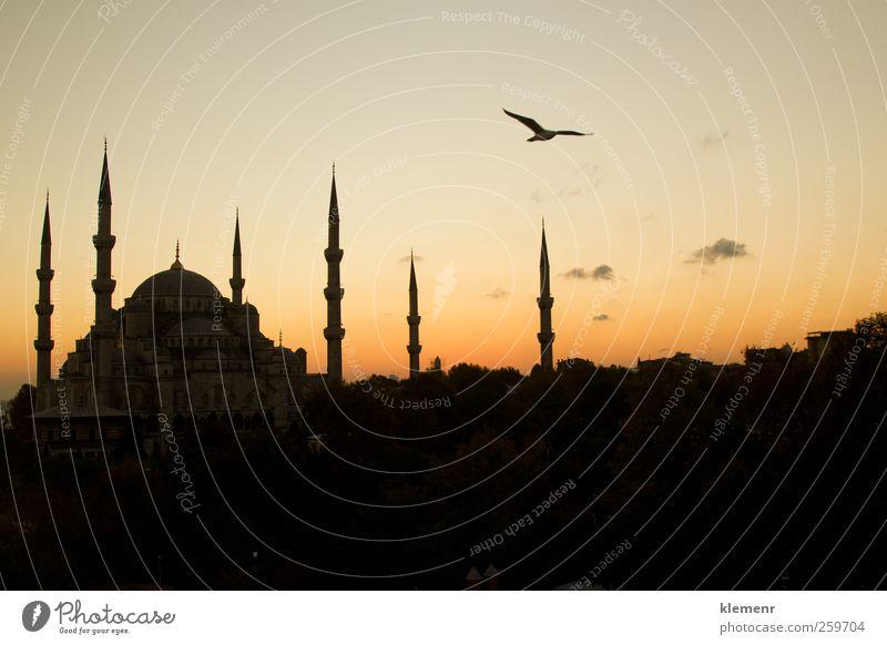 Die schöne blaue Moschee in Istanbul bei Sonnenuntergang Ferien & Urlaub & Reisen Tourismus Landschaft Erde Kirche Gebäude Architektur Denkmal historisch rosa