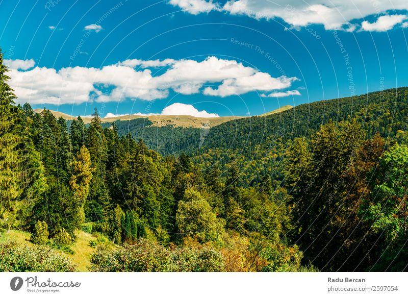 Schöne Karpatenlandschaft Sommerlandschaft in Rumänien Berge u. Gebirge Landschaft schön Natur Wald Panorama (Bildformat) Himmel grün Aussicht