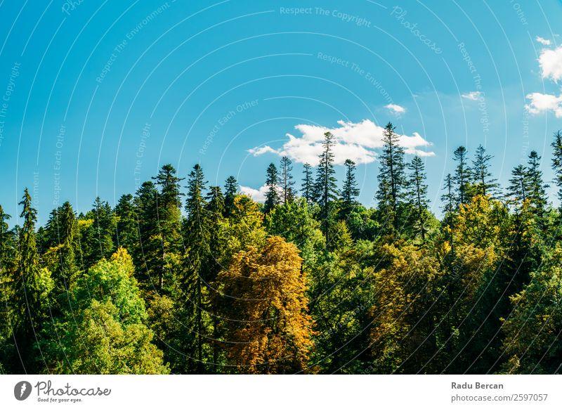 Himmel Ferien & Urlaub & Reisen Natur Sommer Pflanze blau Farbe schön grün Landschaft Sonne Baum Wolken Wald Ferne Berge u. Gebirge