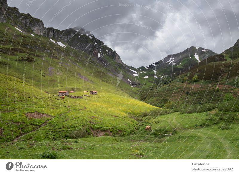 Hirtenhütten Sommer Pflanze grün Landschaft Tier Einsamkeit ruhig Berge u. Gebirge gelb Umwelt Wiese Gras braun grau Horizont Idylle
