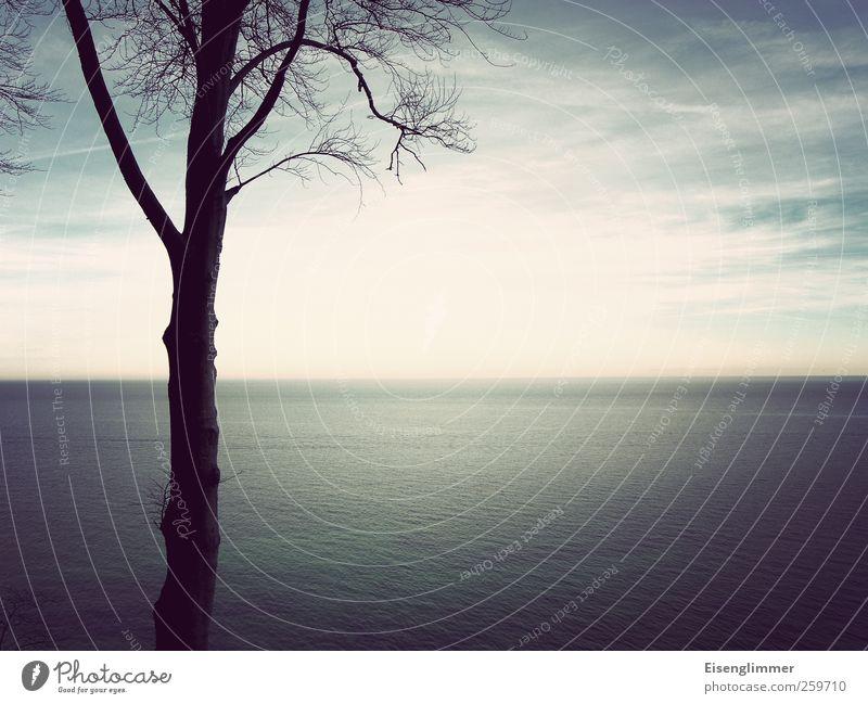 Ostseeblick Himmel blau Himmel (Jenseits) Wasser weiß Baum Meer Landschaft Wolken Ferne Winter Horizont ästhetisch Insel Rügen
