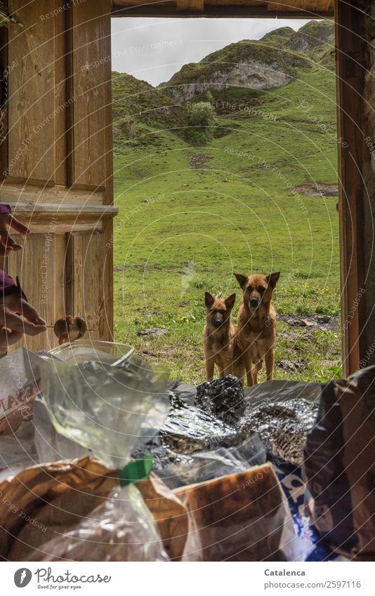 Emotion | Füttern Lebensmittel Wurstwaren Käse Oliven Ernährung Finger Natur Landschaft Tier Sommer schlechtes Wetter Gras Wiese Felsen Berge u. Gebirge Tür