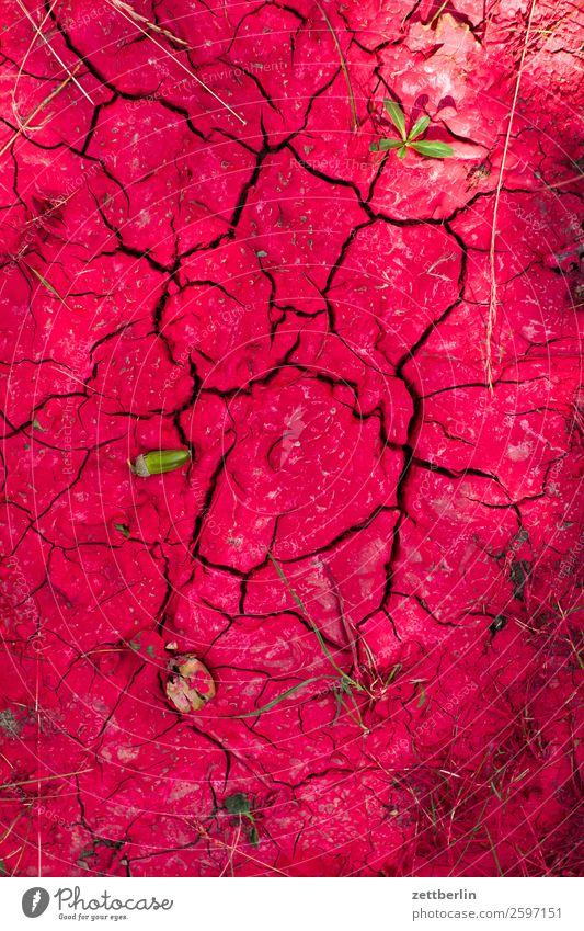 Verschüttete Farbe rot Hintergrundbild Farbstoff Textfreiraum Wüste Müll Umweltschutz Riss Oberfläche getrocknet Umweltverschmutzung vertrocknet Kruste