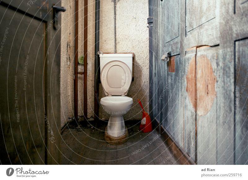 Royal flush Wand Mauer Autotür Toilette eitel Toilettenpapier