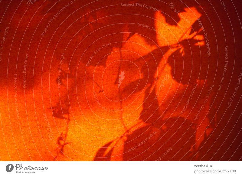 Schatten am Fenster again Ast Baum Blatt Garten Menschenleer Natur Pflanze Strauch Textfreiraum Tiefenschärfe Zweig Licht Hintergrundbild Grafik Illustration