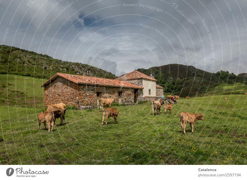 Auf der Alm Mensch Himmel Ferien & Urlaub & Reisen Natur Hund blau grün Landschaft Wolken Umwelt Frühling Wiese Gras Stein orange braun