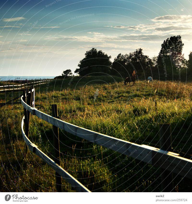 Rückenwind Freiheit Umwelt Natur Landschaft Pflanze Tier Wasser Himmel Wolken Klima Schönes Wetter Wind Nutztier Pferd 2 Fressen stehen Zusammensein Tierliebe