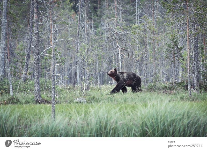 Meister Petz Natur grün Landschaft Tier Wald Umwelt Wiese klein braun Angst Kraft wild Wildtier bedrohlich beobachten Neugier
