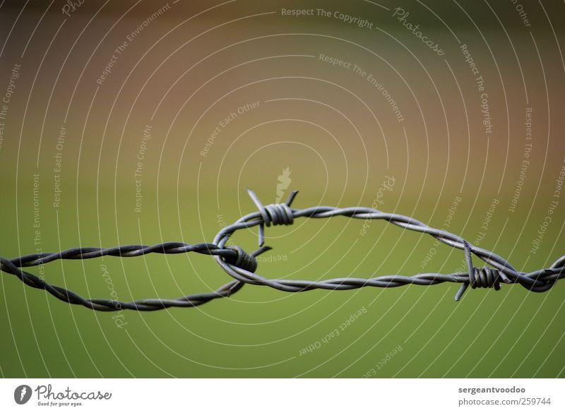 Halt mich fest, ich werd´ verrückt..... Drahtzaun Spitze stachelig Kraft Willensstärke Mut Sicherheit Schutz Einigkeit loyal Zusammensein Treue Solidarität