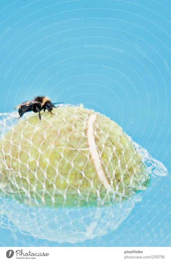Gefangener Tennisball Natur blau Wasser Meer Sommer Tier ruhig klein Schwimmen & Baden Netzwerk Flügel rund Ball Netz tauchen Biene