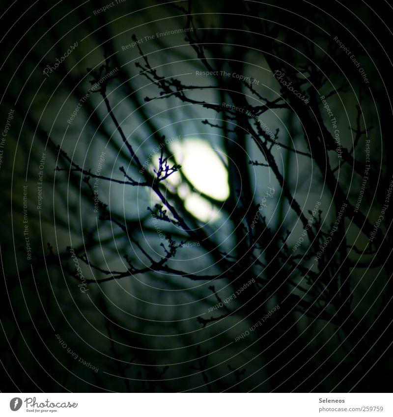 Nacht im Wald Umwelt Natur Himmel Nachthimmel Vollmond Herbst Winter Pflanze Baum leuchten dunkel natürlich Farbfoto Außenaufnahme Licht Schatten Kontrast