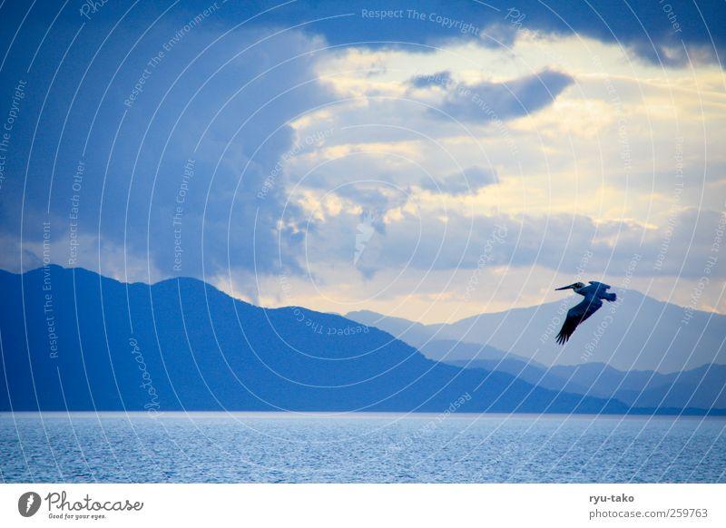 König der Lüfte Natur blau Wasser weiß Sommer Meer Tier Einsamkeit Wolken ruhig Landschaft Berge u. Gebirge Bewegung Freiheit Luft Vogel