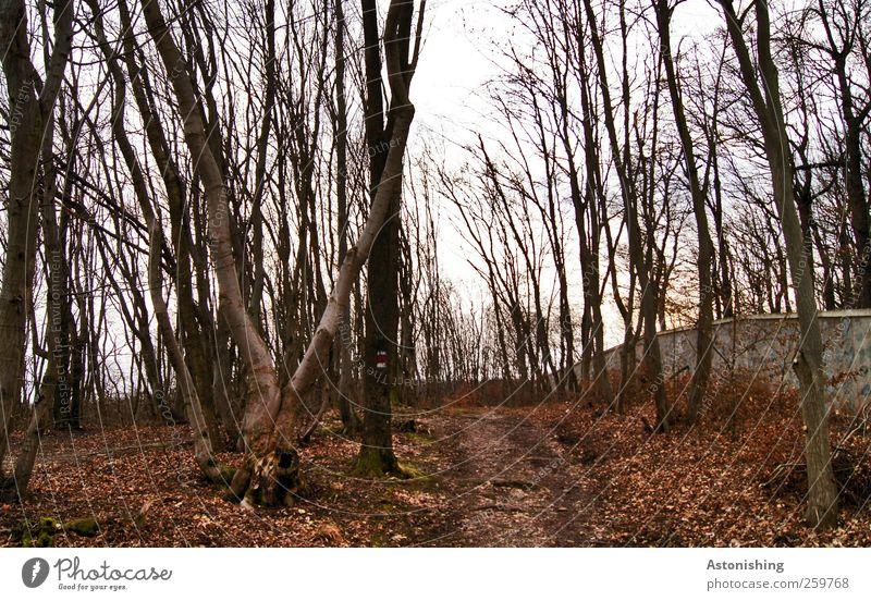 entlang der Mauer Umwelt Natur Landschaft Pflanze Erde Himmel Herbst Winter Wetter Baum Blatt Wald Hügel Wand Wege & Pfade hoch braun rot schwarz weiß Baumstamm