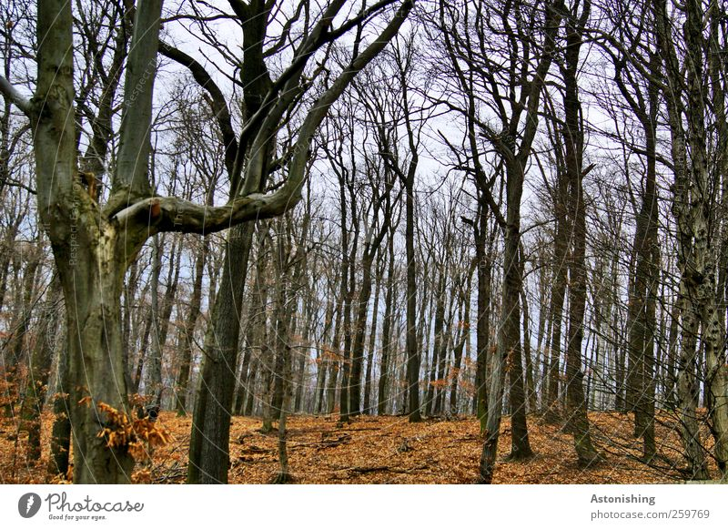 Wald im Winter Himmel Natur blau Baum rot Pflanze Winter Blatt schwarz Herbst Umwelt Landschaft Wetter braun Erde hoch